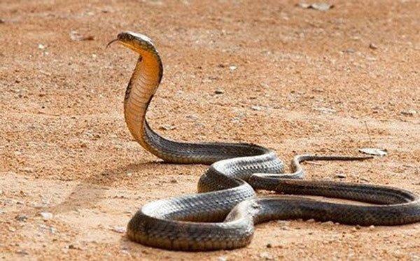 Mơ thấy rắn
